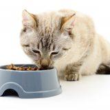 Hold din kat sund og rask med fodertilskud til katte