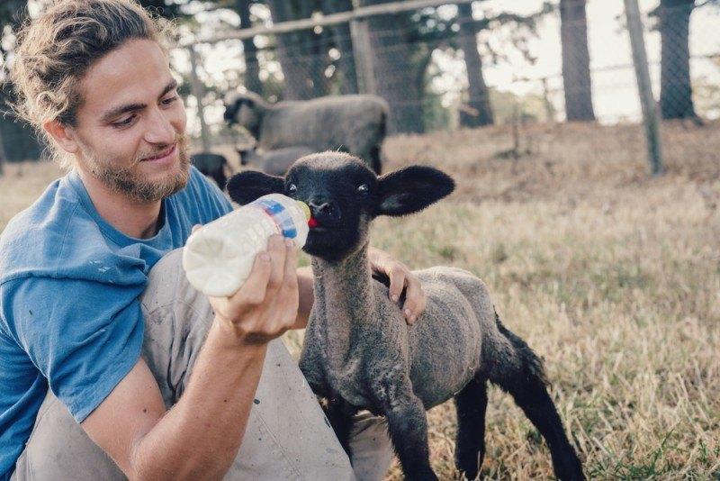 Brænder du for at gøre en vigtig forskel for dyr?