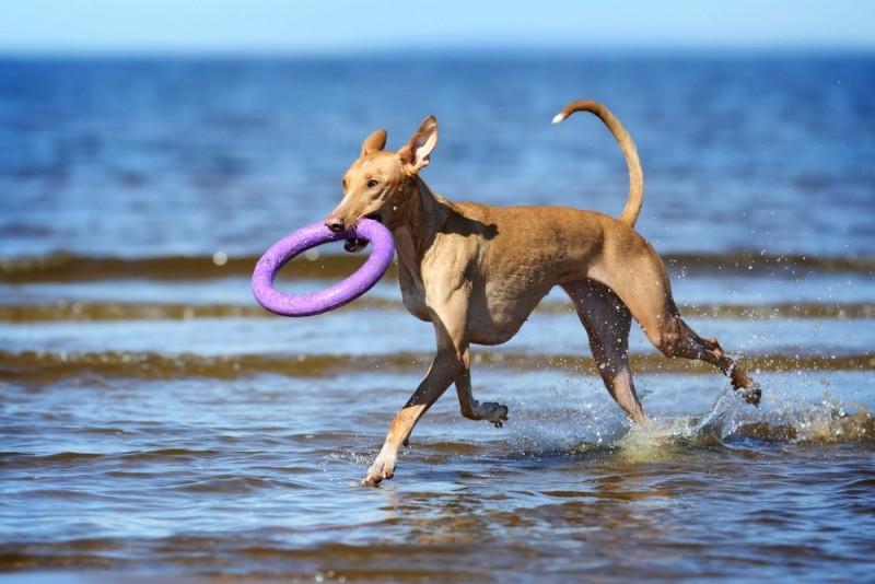 Sjovt og stimulerende aktivitetslegetøj til din hund eller kat