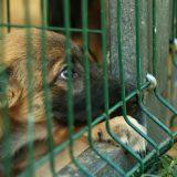Giv et dyr et bedre liv - adoptér et internat-dyr