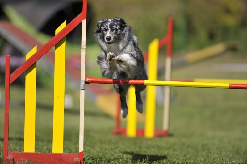 Hjælpemidler til træning af kæledyr