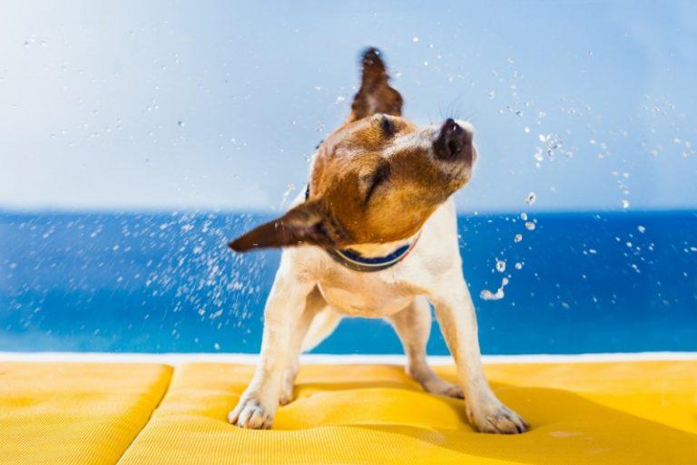 Få en god ferie sammen med dit kæledyr