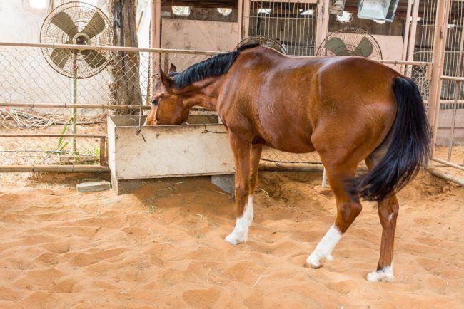 Fodertilskud til heste