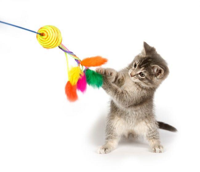 aktivitetslegetøj til dyre