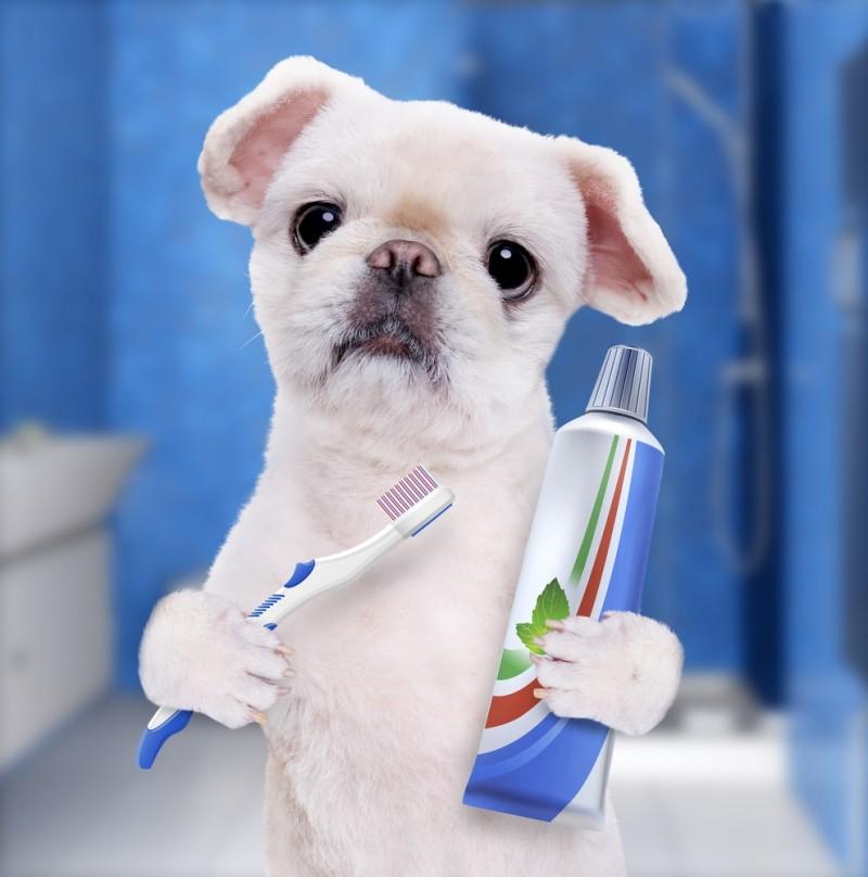 Børst din hunds bisser med effektiv hundetandpasta og undgå tandproblemer