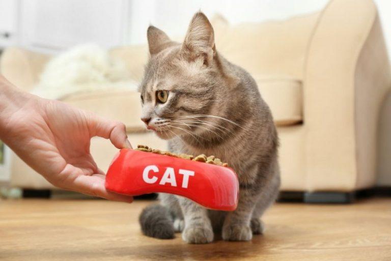 Foder og godbider til katte - hvad skal jeg vælge?