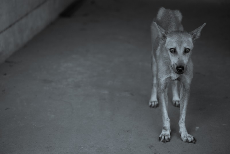 Sådan kan du forhindre dyremishandling