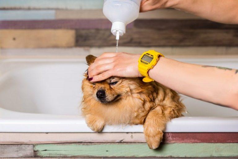 Hundeshampoo med eller uden duft?
