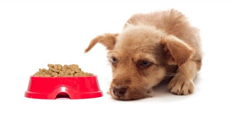 Sund og stærk hund med velsmagende fodertilskud
