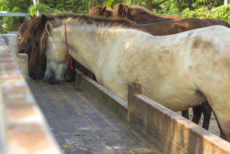 Fodertilskud til heste – til heste med et aktivt liv