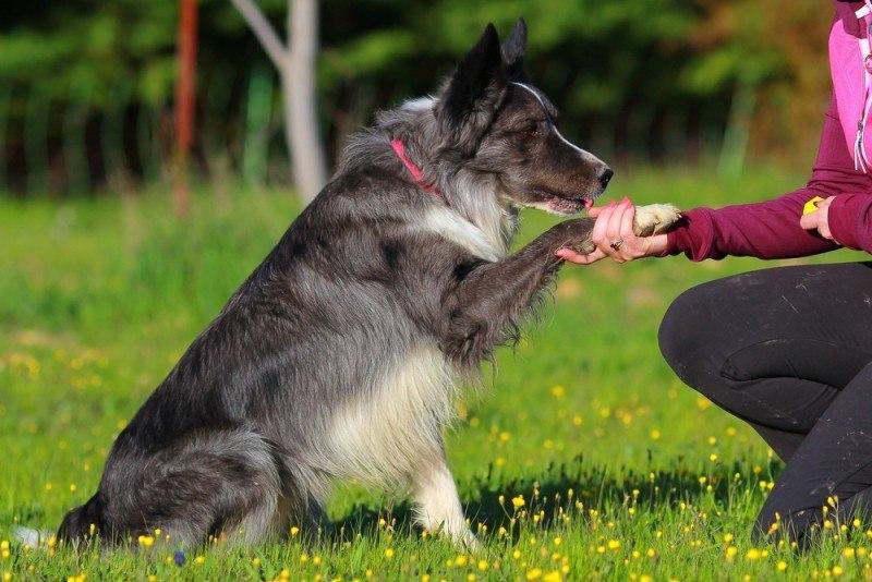 Sådan træner du dit dyr