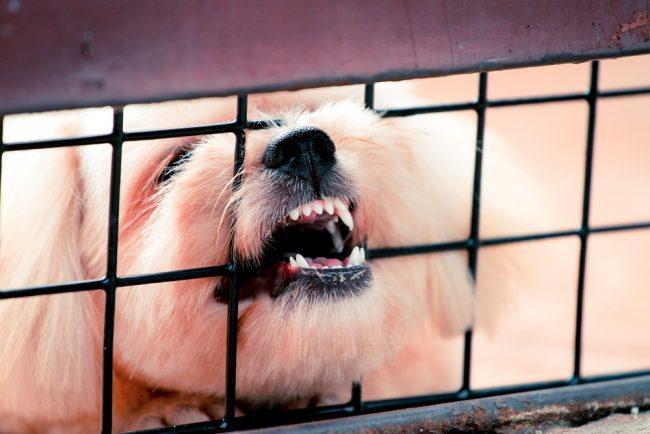 undgå dyremishandling