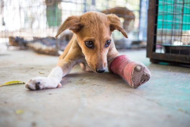 Sådan er straffen for dyremishandling i dag