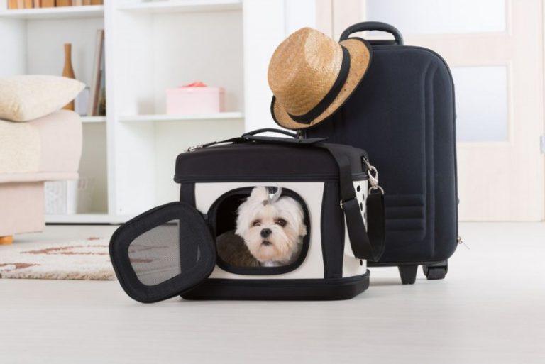 Tag din hund med dig overalt i stilfulde og praktiske hundetasker