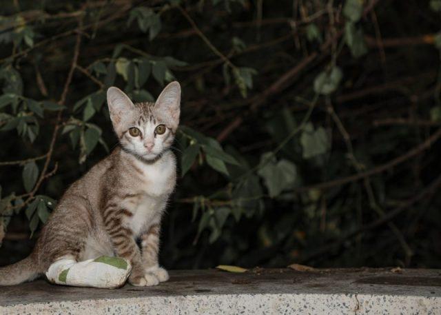 Find nemt den rette person til anmeldelse af dyremishandling