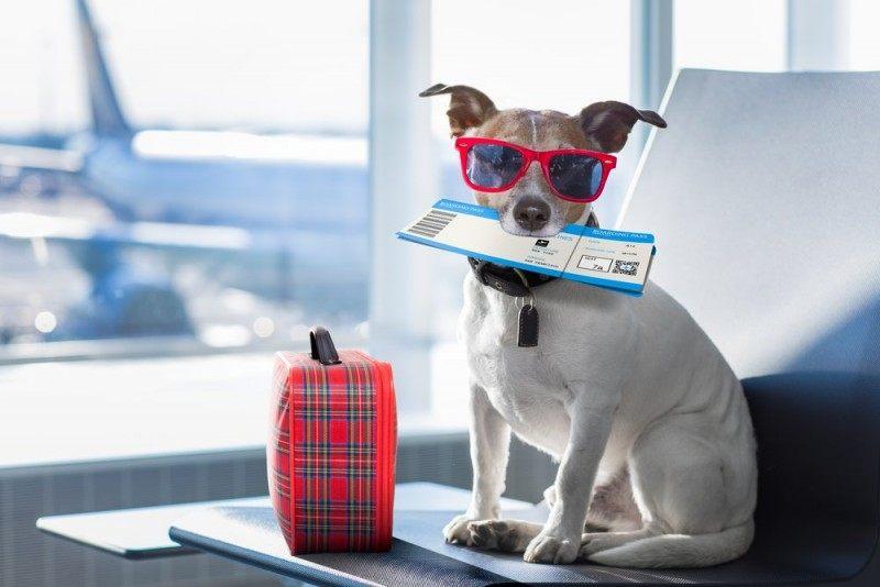 Rejs med din hund – det kan sagtens lade sig gøre!