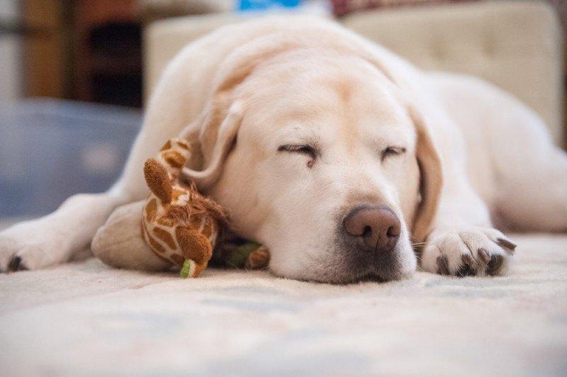 Hundepensioner er strikse med vaccinationspapirer og konkurrencedygtige på prisen
