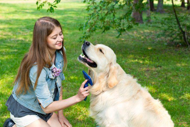En filterknuser til hunde og katte er effektiv pelspleje af dine kæledyr