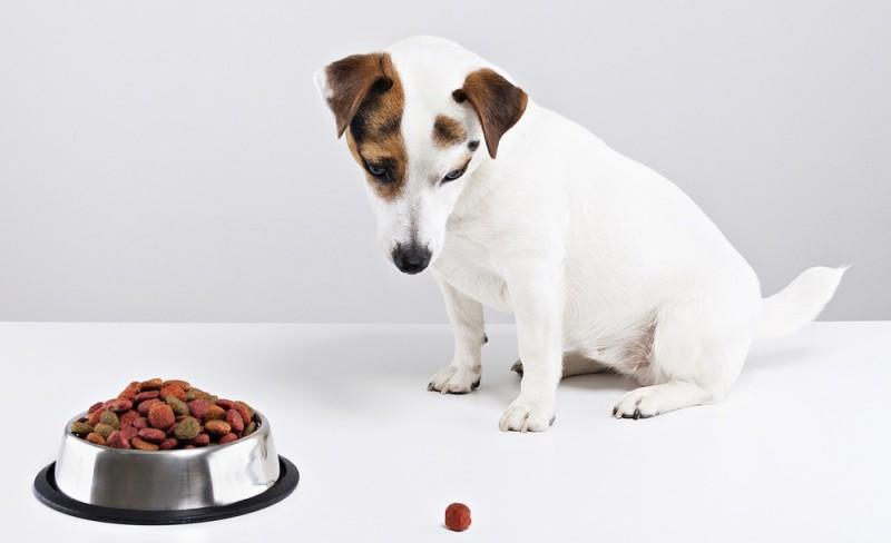 Foder og godbidder til hunde