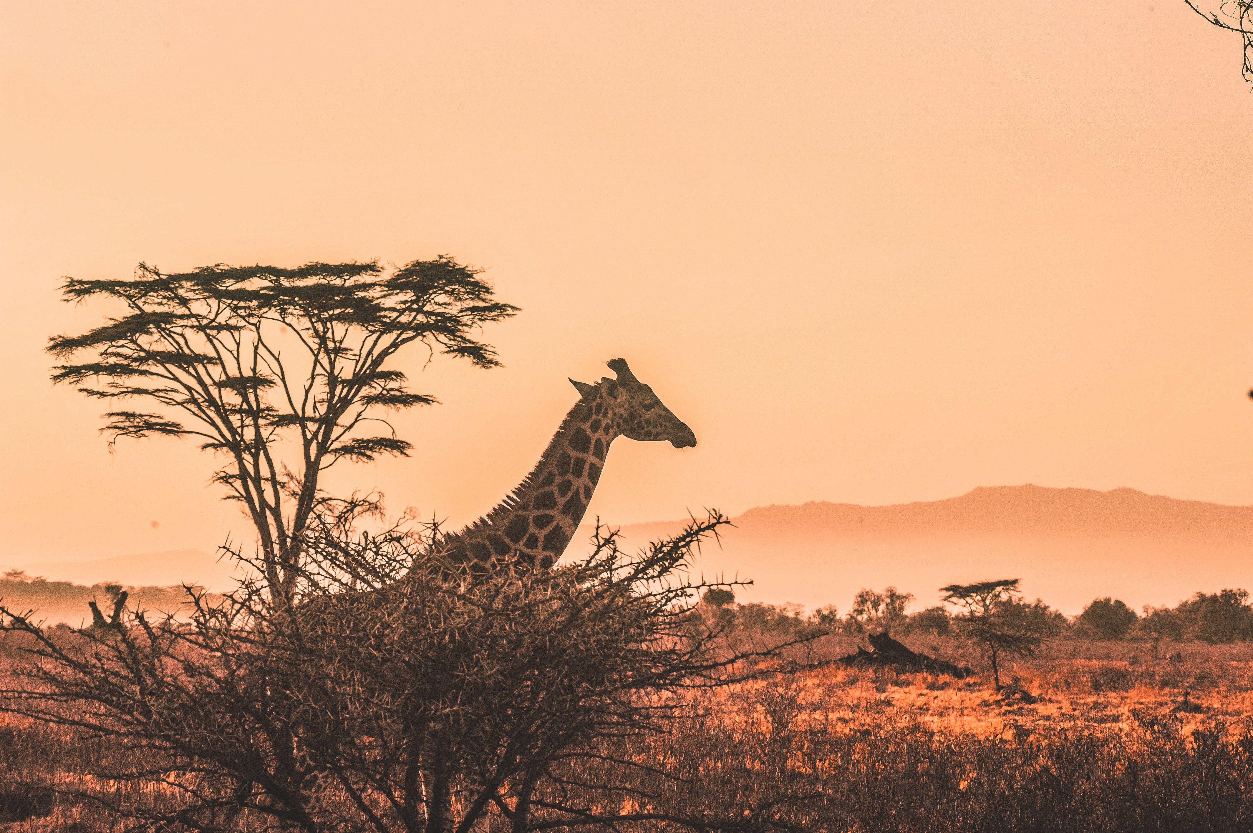 Tag børnene med på safari