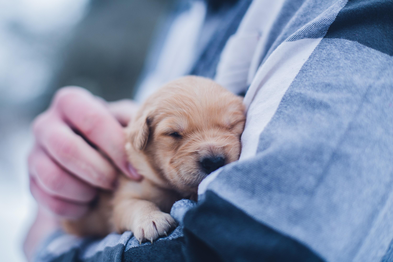 Vælg en fast dyreklinik med ekspertise og erfaring indenfor kæledyr